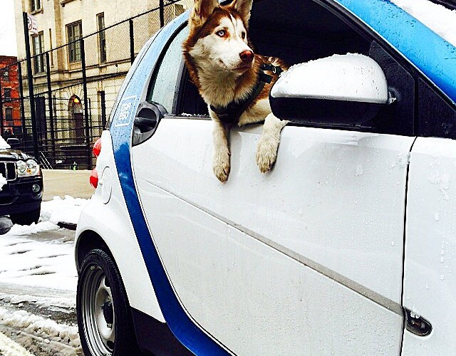 car2go-blog-schnee-nyc-hund